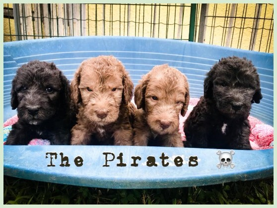 Plumeria's Pirates litter